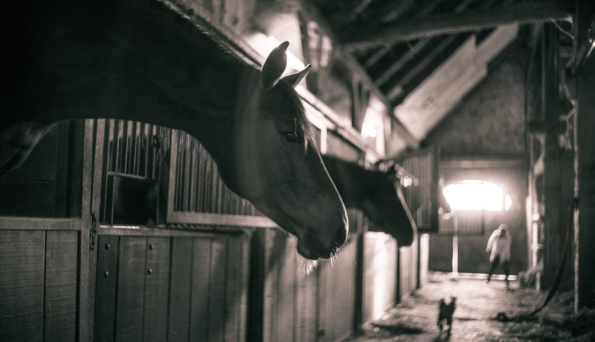 Anderson Equine